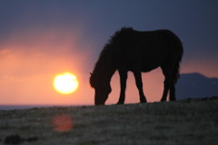 Horses at sunset, Tumabrekka, Iceland 2013
